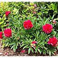 Le jardin de mai