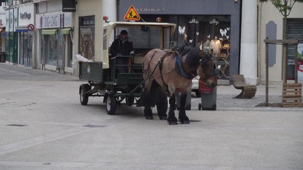 cheval_cooplix_001