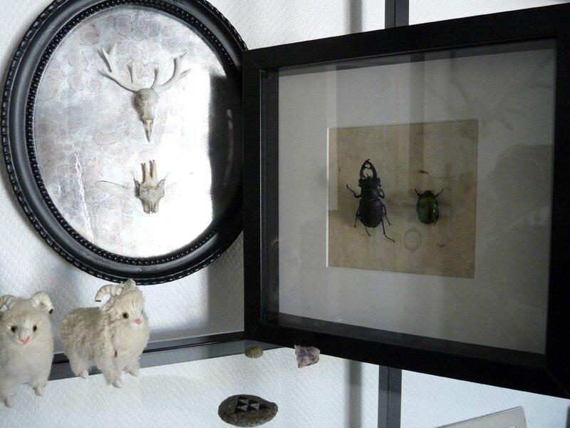 cadre insectes 03