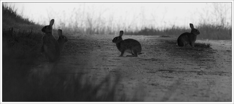 plaine lapins 2 matin 100415 nb