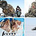 Du sang de mammouth dans une carcasse congelée