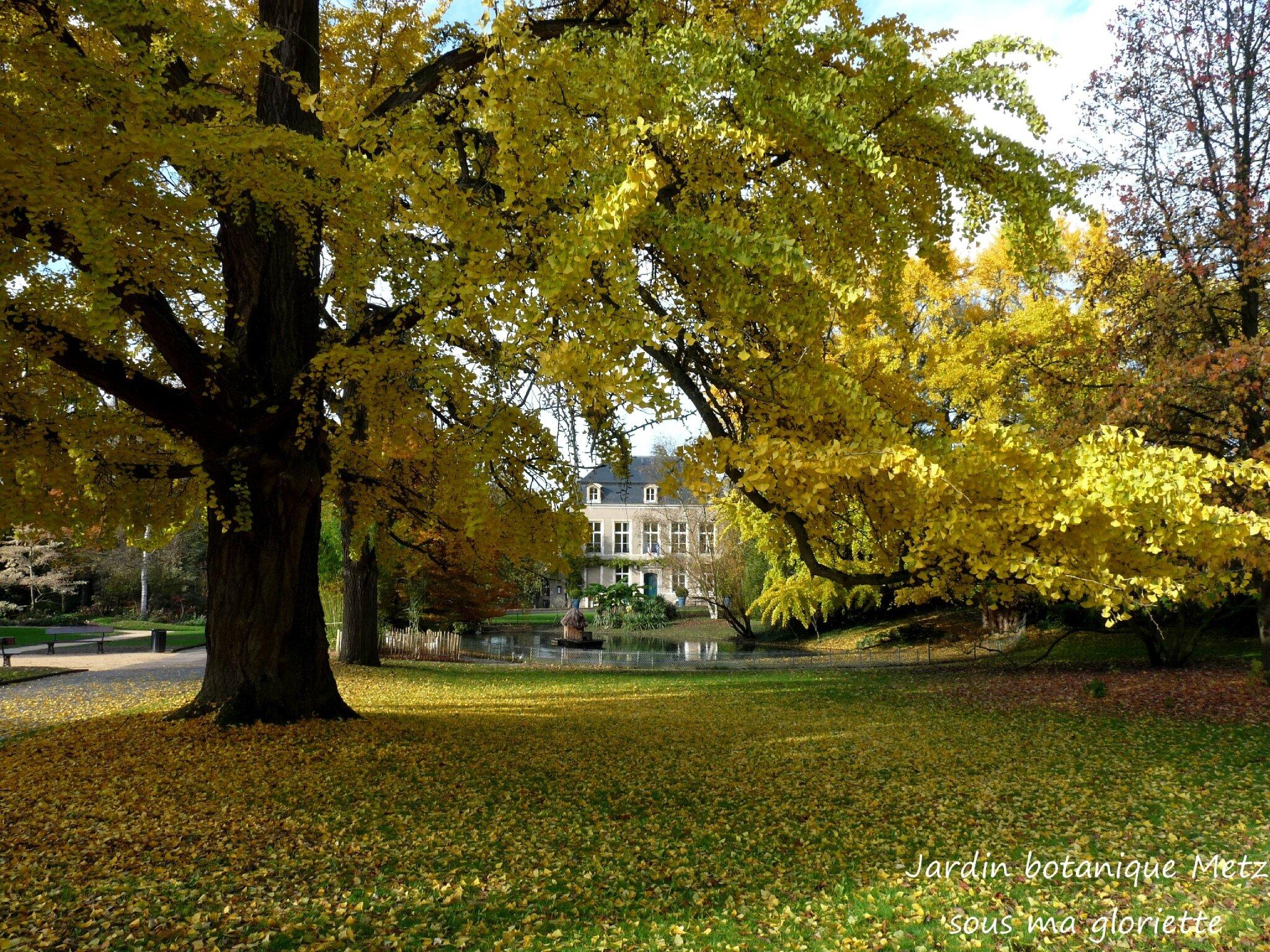 les couleurs dautomne du jardin botanique de metz - Jardin Botanique Metz