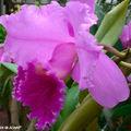 Le rendez-vous incontournable des amateurs d'orchidées