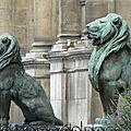 Lions (Large)