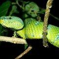 4c. Parc national de Bako (Bornéo)