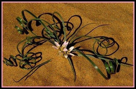 arabesque_fleurie