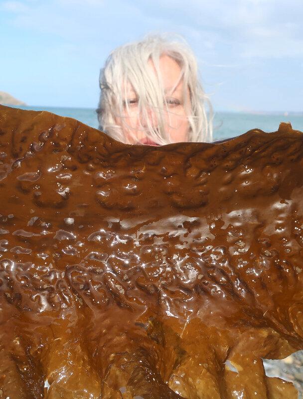 algues d