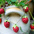fraises autour du cou