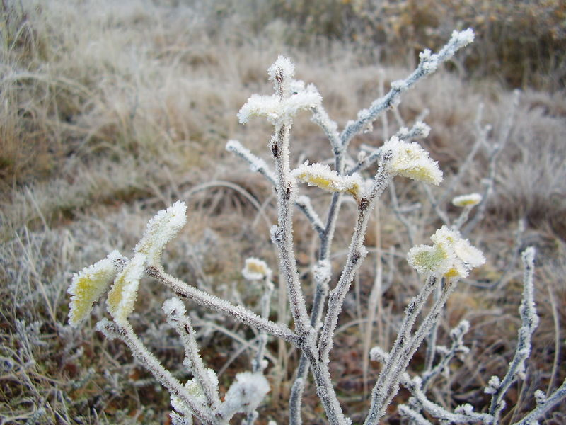 01-10-08 Givre (21)