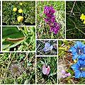 Itinérance onf : la faune et la flore; fin mai 2017
