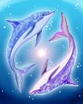 Dolphin_Core