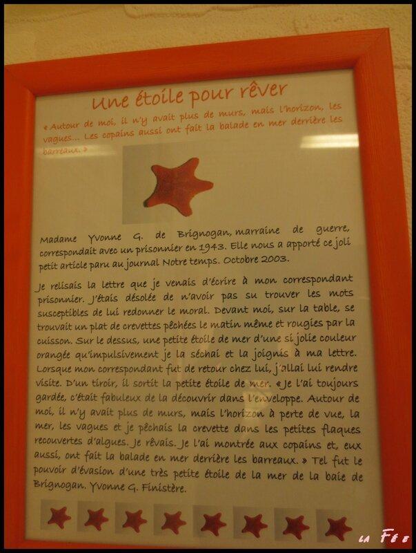 musée des coquillages (10)
