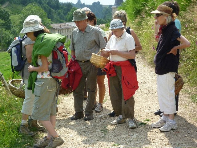 sortie herbes sauvages 2010