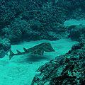 requin ange_las galletas_xru_2