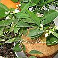 Gâteau de savoie aux agrumes du jardin