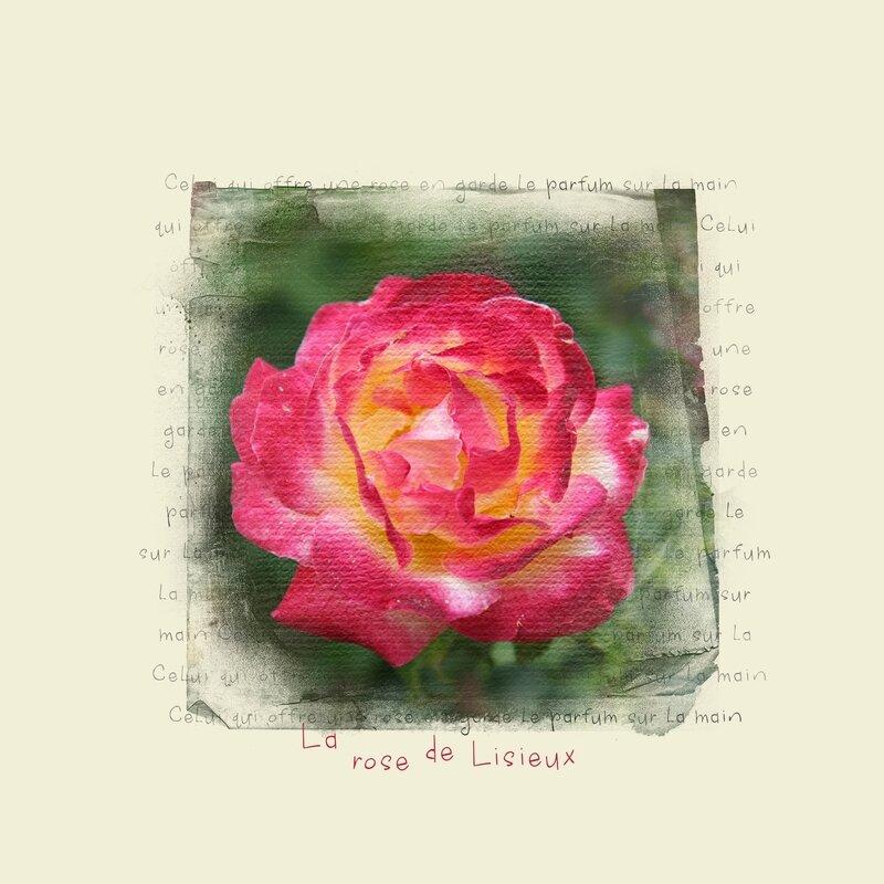 Rose de Lisieux