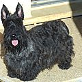 hello scottie (4)