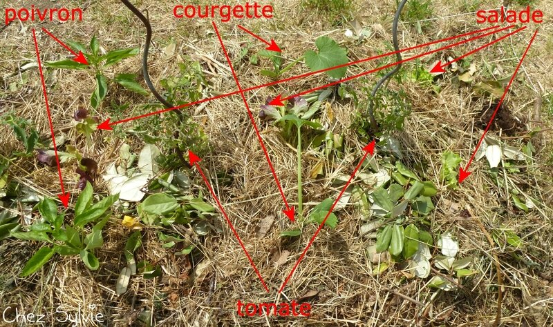 Potager permaculture plantations 03