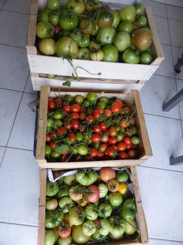 20-tomates (2)
