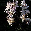 Dernières fleurs de mon jardin en macro ou proxy photographie. jeux de lumières.