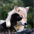 TENDRE MERE
