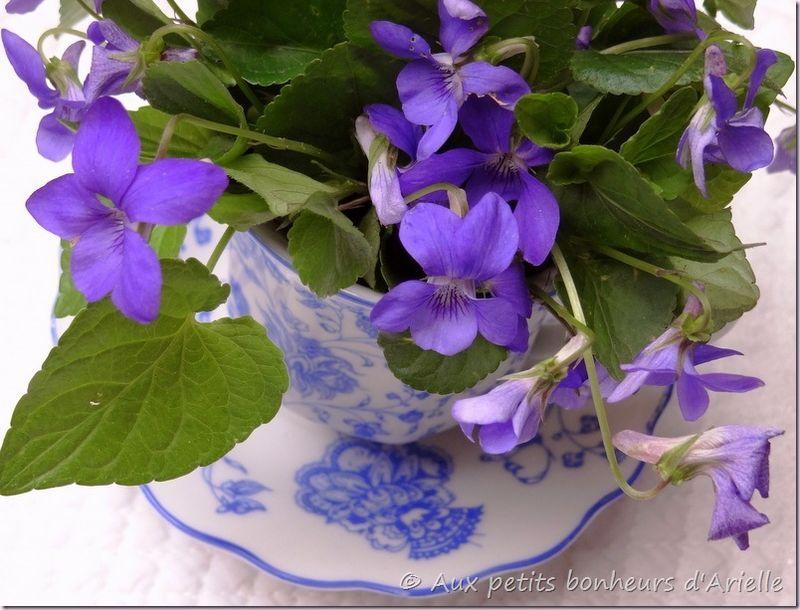 Violettes (10)