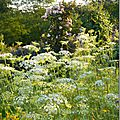 Windows-Live-Writer/Jardin_10232/DSCN0757_thumb