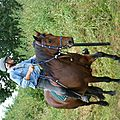 Jeux équestres manchots - parcours de pleine nature après-midi (170)