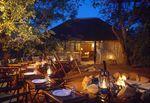 safari_en_Afrique_du_Sud