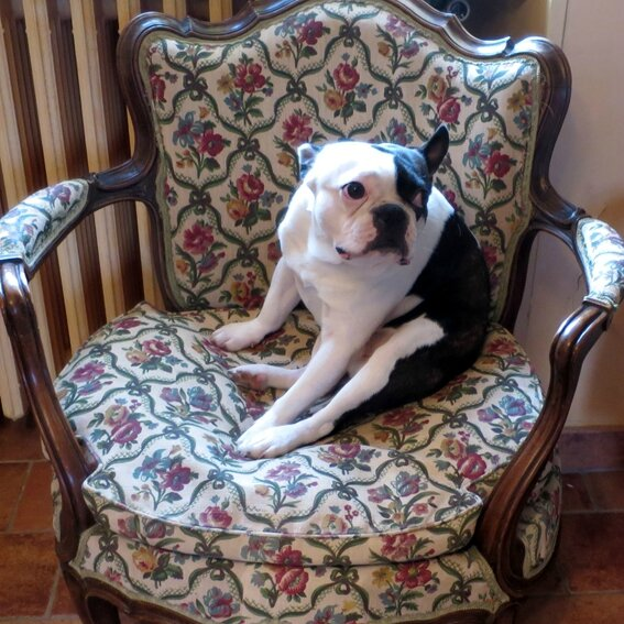 Titus fauteuil b