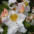notre jardin 19 mai 2008 (148)