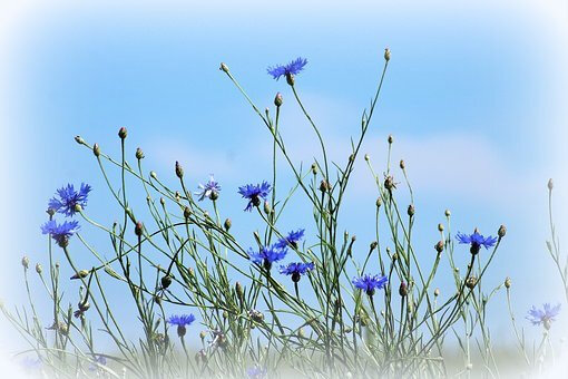 blog bleuets