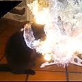Chat noir pour sapin blanc