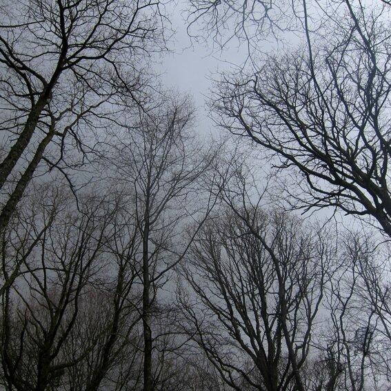 arbres a