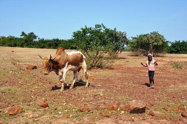 DSC_0879s occuper des bêtes à goungla b