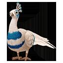 icon_peafowl_adult_silverpiedspalding_128-db8c841e11f031c489