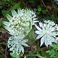 P1070825 Magnifique fleur