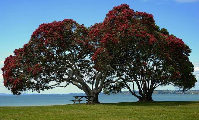 arbre-en-fleur-en-decembre