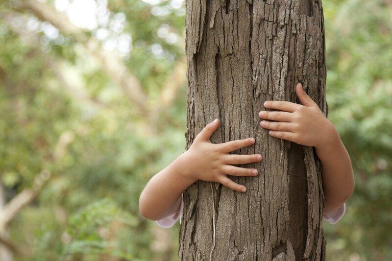 enlacer l'arbre