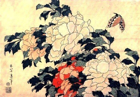 Pivoine Hokusai