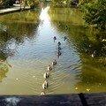 promenade aux ibis