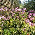 rhododendron façade est