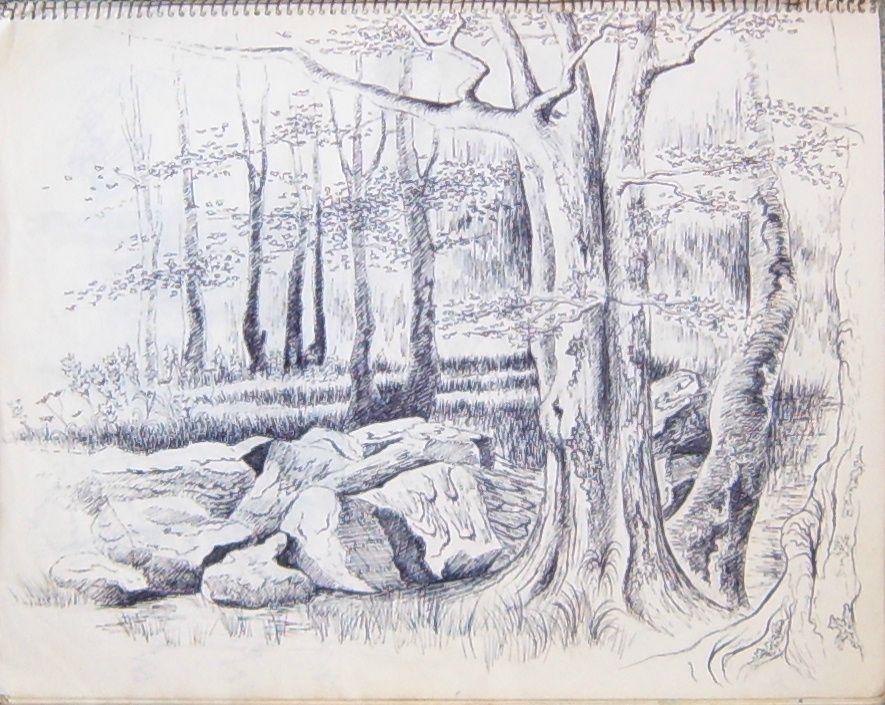 Croquis sur site au feutre sous-bois Ghislaine Letourneur - Drawing of undergrowth