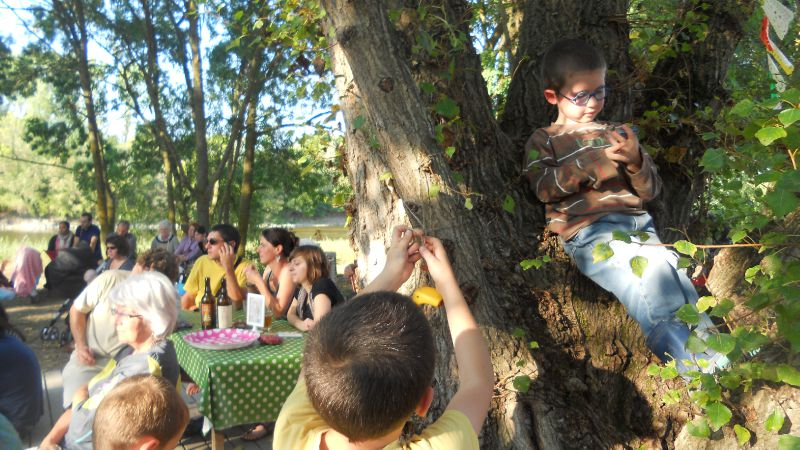 enfants dans l'arbre