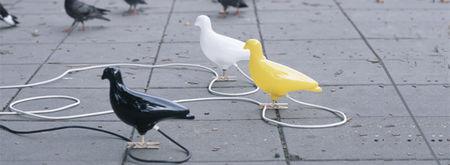 pigeons__680x250_
