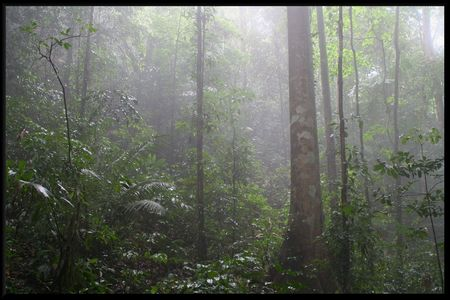 Guyana_forest2