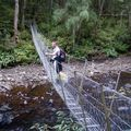 Bridge Track catlins River Ghis