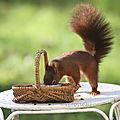 Cacahuète passe presque tous les jours ...