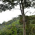 Avent 9, pipette et molette traversent la forêt équatoriale
