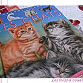 La grande imagerie : les chats